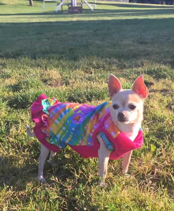 """<div class=""""meta image-caption""""><div class=""""origin-logo origin-image none""""><span>none</span></div><span class=""""caption-text"""">In honor of National Dog Day, ABC7 viewers are sharing pictures of their furry friends! Show us your pooch by tagging pics #abc7now! (Photo submitted to KGO-TV by Francy Soriano/Facebook)</span></div>"""