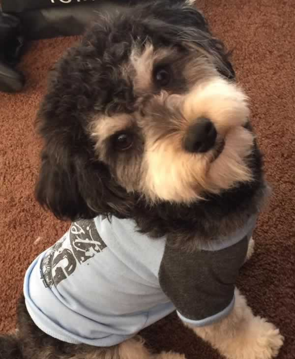 """<div class=""""meta image-caption""""><div class=""""origin-logo origin-image none""""><span>none</span></div><span class=""""caption-text"""">In honor of National Dog Day, ABC7 viewers are sharing pictures of their furry friends! Show us your pooch by tagging pics #abc7now! (Photo submitted to KGO-TV by Julianne Gonzalez/Facebook)</span></div>"""