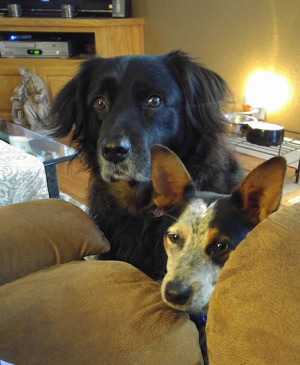 """<div class=""""meta image-caption""""><div class=""""origin-logo origin-image none""""><span>none</span></div><span class=""""caption-text"""">In honor of National Dog Day, ABC7 viewers are sharing pictures of their furry friends! Show us your pooch by tagging pics #abc7now! (Photo submitted to KGO-TV by Janean Patchin Dwyer/Facebook)</span></div>"""