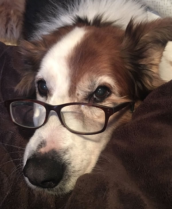 """<div class=""""meta image-caption""""><div class=""""origin-logo origin-image none""""><span>none</span></div><span class=""""caption-text"""">In honor of National Dog Day, ABC7 viewers are sharing pictures of their furry friends! Show us your pooch by tagging pics #abc7now! (Photo submitted to KGO-TV by Lucinda Mendoza/Twitter)</span></div>"""