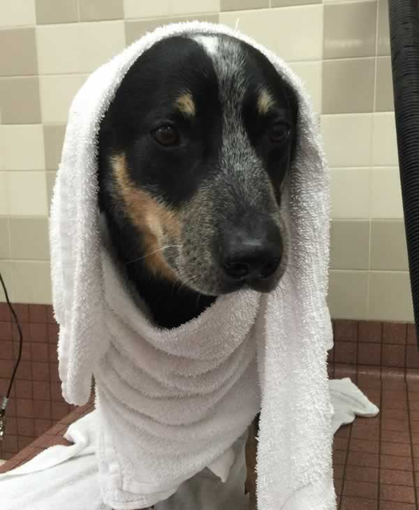 """<div class=""""meta image-caption""""><div class=""""origin-logo origin-image none""""><span>none</span></div><span class=""""caption-text"""">In honor of National Dog Day, ABC7 viewers are sharing pictures of their furry friends! Show us your pooch by tagging pics #abc7now! (Photo submitted to KGO-TV by Sieerra/Twitter)</span></div>"""