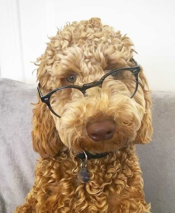 """<div class=""""meta image-caption""""><div class=""""origin-logo origin-image none""""><span>none</span></div><span class=""""caption-text"""">In honor of National Dog Day, ABC7 viewers are sharing pictures of their furry friends! Show us your pooch by tagging pics #abc7now! (Photo submitted to KGO-TV by Seth Weisfeld/Twitter)</span></div>"""