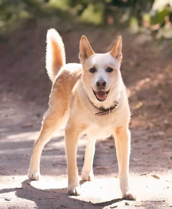 """<div class=""""meta image-caption""""><div class=""""origin-logo origin-image none""""><span>none</span></div><span class=""""caption-text"""">In honor of National Dog Day, ABC7 viewers are sharing pictures of their furry friends! Show us your pooch by tagging pics #abc7now! (Photo submitted to KGO-TV by picturehappyphotos/Instagram)</span></div>"""