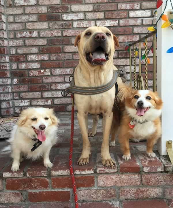 """<div class=""""meta image-caption""""><div class=""""origin-logo origin-image none""""><span>none</span></div><span class=""""caption-text"""">In honor of National Dog Day, ABC7 viewers are sharing pictures of their furry friends! Show us your pooch by tagging pics #abc7now! (Photo submitted to KGO-TV by mel9661/Instagram)</span></div>"""