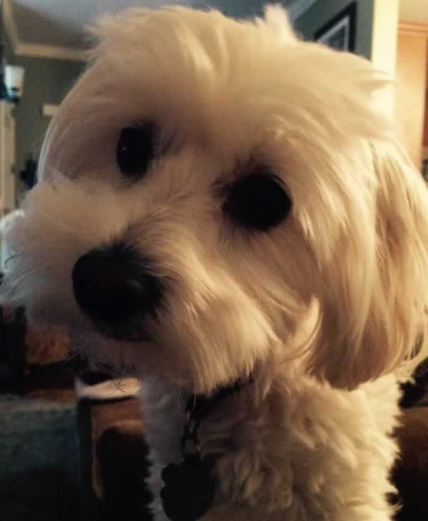 """<div class=""""meta image-caption""""><div class=""""origin-logo origin-image none""""><span>none</span></div><span class=""""caption-text"""">In honor of National Dog Day, ABC7 viewers are sharing pictures of their furry friends! Show us your pooch by tagging pics #abc7now! (Photo submitted to KGO-TV by Jacob Critser/Twitter)</span></div>"""