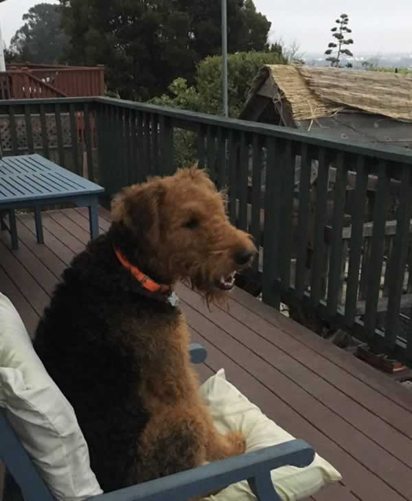 """<div class=""""meta image-caption""""><div class=""""origin-logo origin-image none""""><span>none</span></div><span class=""""caption-text"""">In honor of National Dog Day, ABC7 viewers are sharing pictures of their furry friends! Show us your pooch by tagging pics #abc7now! (Photo submitted to KGO-TV by maryandjohn/Twitter)</span></div>"""