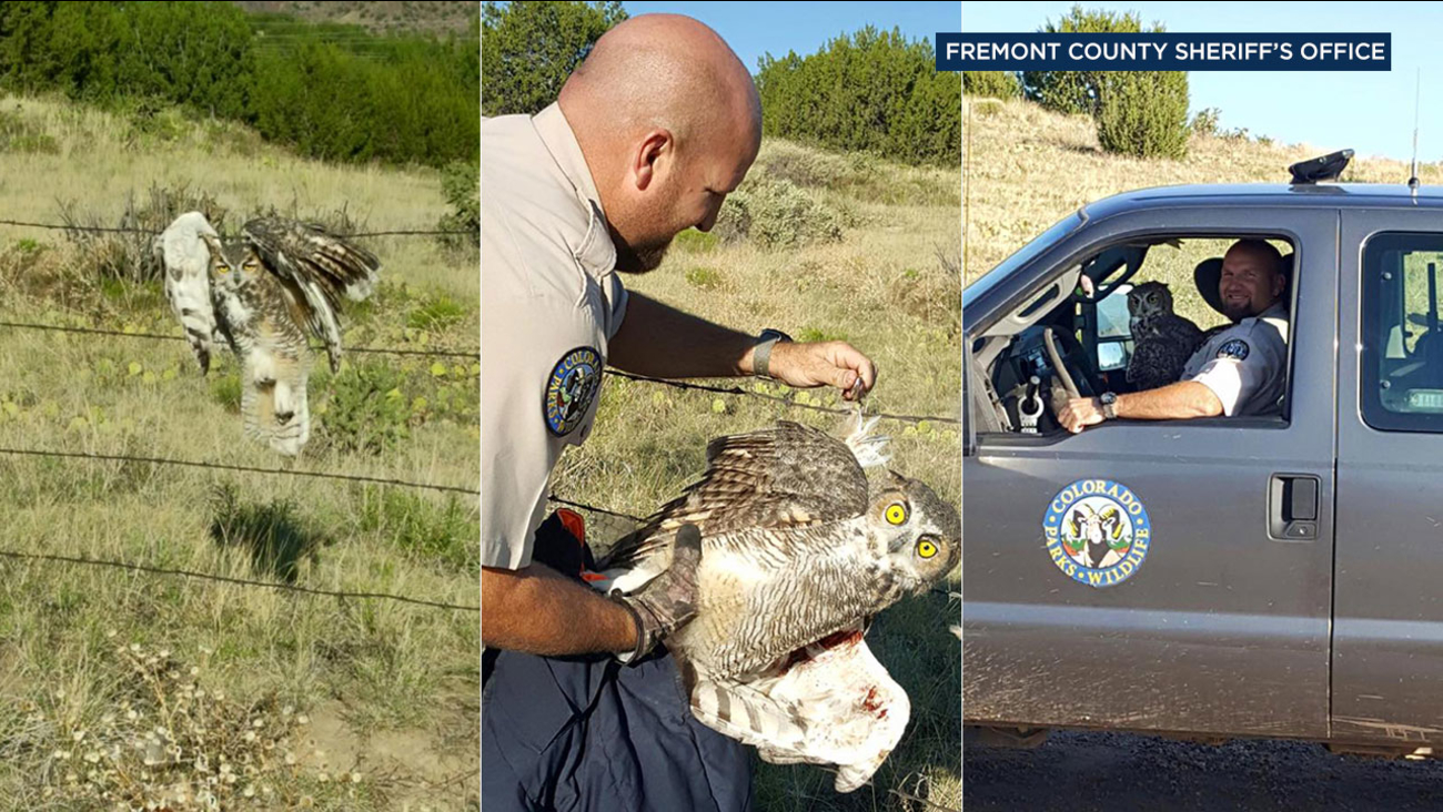 A state wildlife officer in Fremont County, Colo. was able to free an owl stuck in a barbed wire fence and bring it to a rehab center.