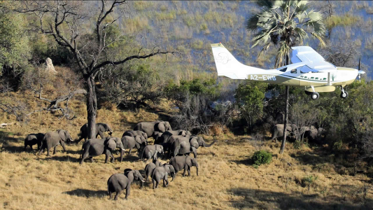 In this July 2014 photo provided by Vulcan Inc., scientists with Great Elephant Census fly over Botswana, Africa during a survey of savanna elephants on the continent.