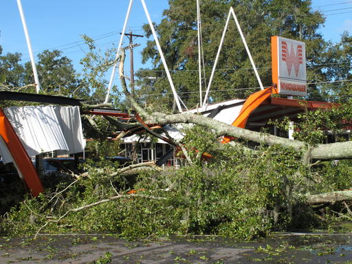 """<div class=""""meta image-caption""""><div class=""""origin-logo origin-image ap""""><span>AP</span></div><span class=""""caption-text"""">A large oak tree toppled over a Whataburger restaurant in Tallahassee, Fla., Sept. 2, 2016. (AP)</span></div>"""