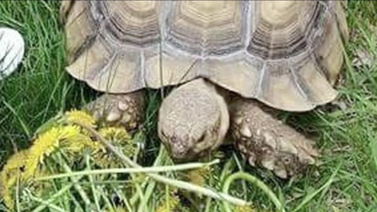 Matilda the tortoise