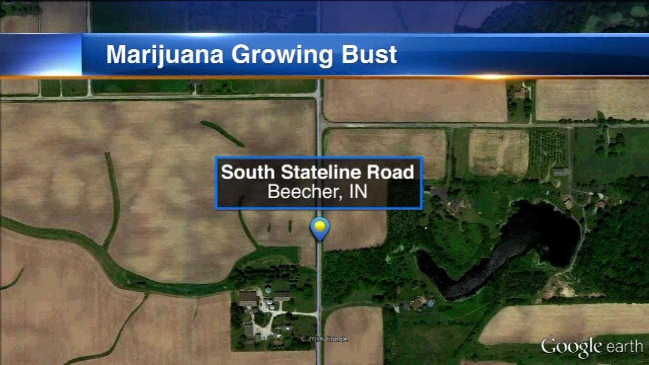 812 marijuana plants found in wooded area in Beecher