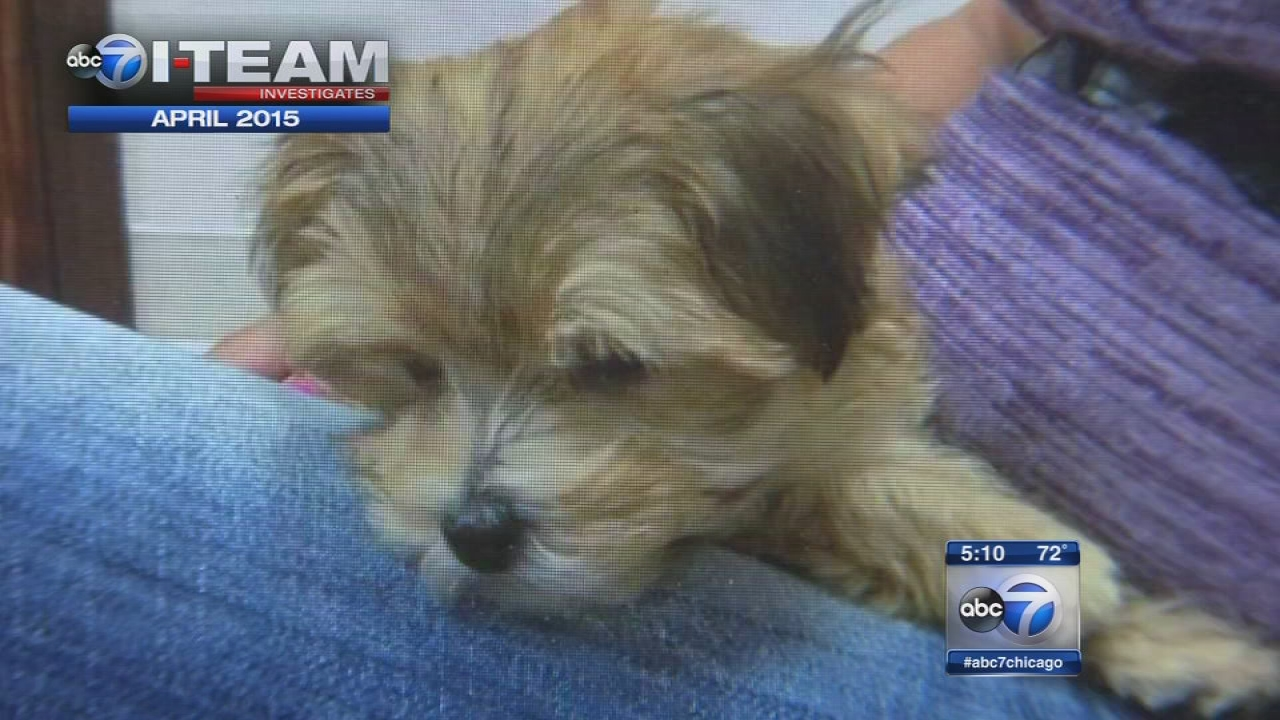 Pet Store Accused Of Selling Sick Puppies Settles Lawsuit Abc7 Chicago