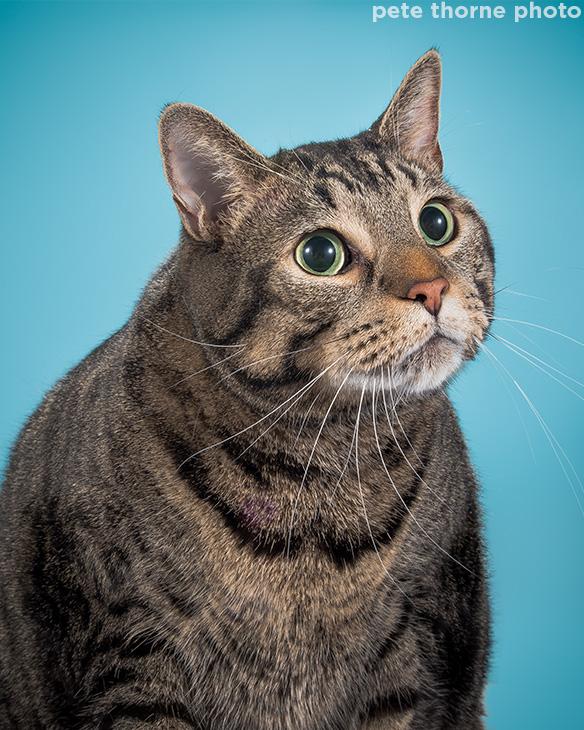 <div class='meta'><div class='origin-logo' data-origin='Creative Content'></div><span class='caption-text' data-credit='pete thorne photo'>Nigel.</span></div>