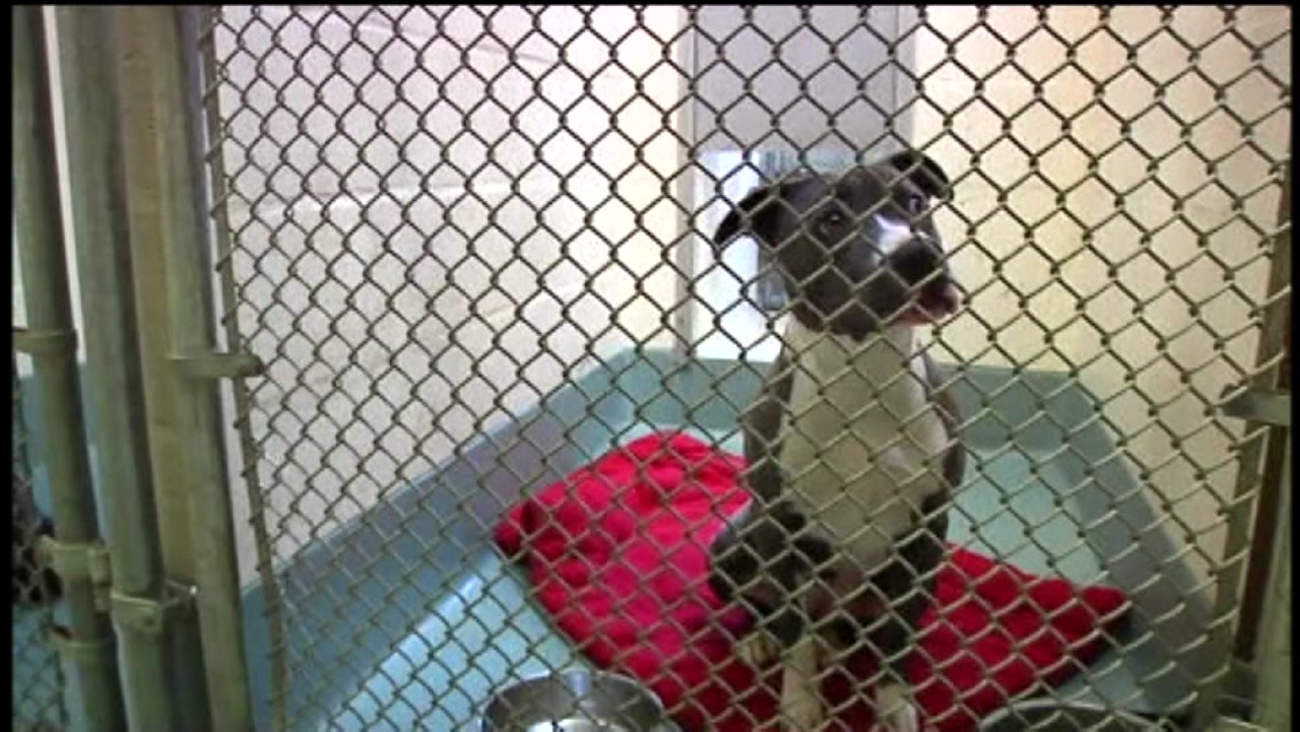 A dog sits in its cage at Friends of the Alameda Animal Shelter in Alameda, Calif. on Thursday, September 29, 2016.