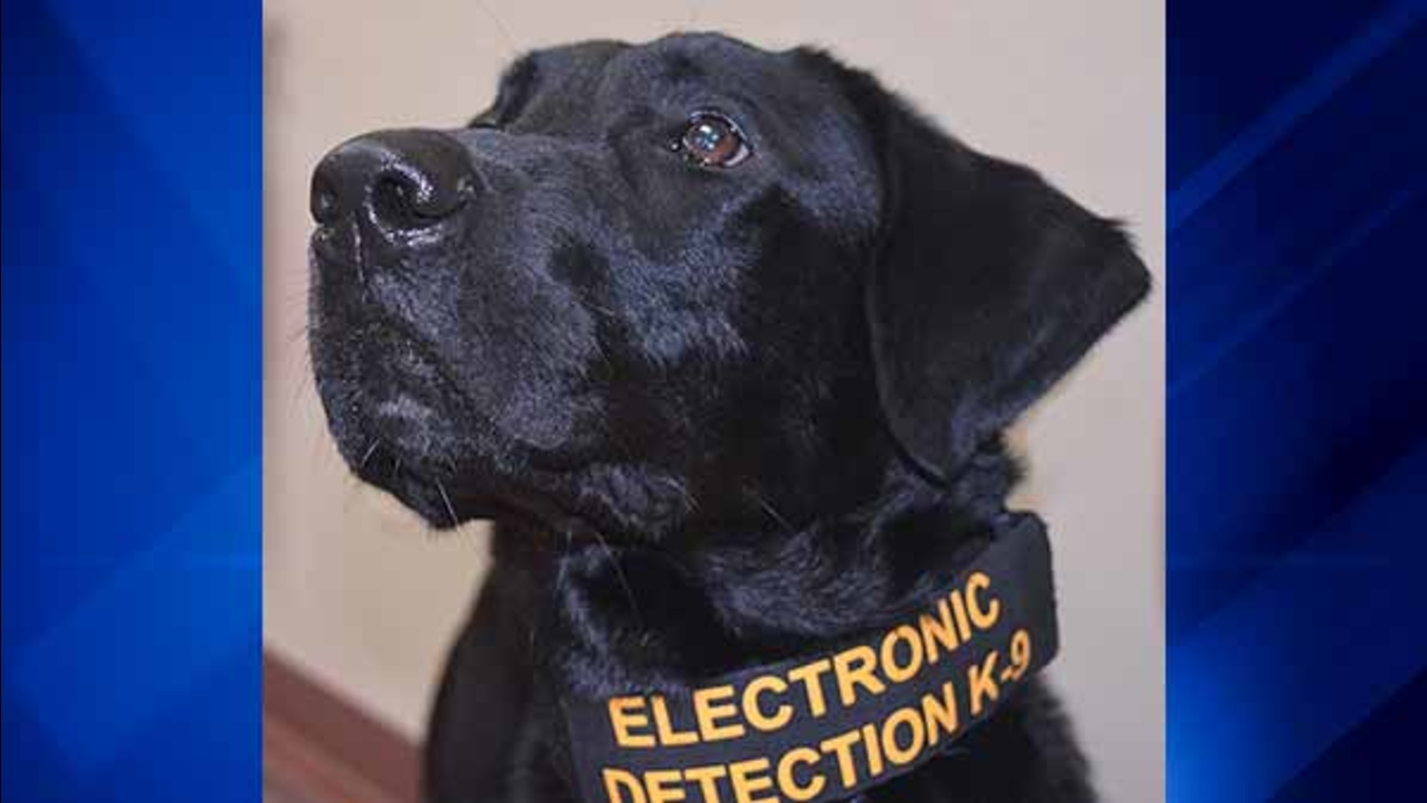 Animal And Dog Porn porn-sniffing dog: will co. gets electronic detection k-9 to