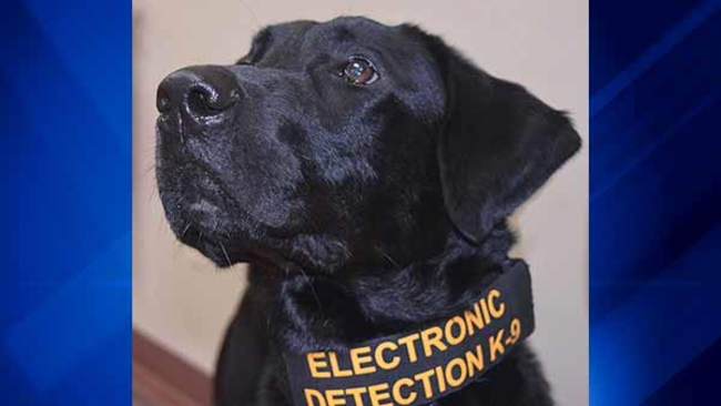 Porn Sniffing Dog Will Co Gets Electronic Detection K 9 To Fight Child Pornography Abc7chicago Com