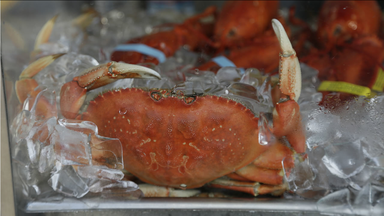 An imported Dungeness crab sits on ice for sale at Fisherman's Wharf Thursday, Nov. 5, 2015, in San Francisco. (AP Photo/Eric Risberg)