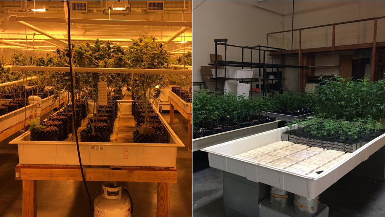 The Los Angeles County Sheriff's Department released these photos from the site of a major marijuana bust in unincorporated Los Angeles County on Wednesday, Oct. 5, 2016.