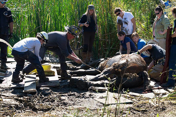 "<div class=""meta image-caption""><div class=""origin-logo origin-image none""><span>none</span></div><span class=""caption-text"">Pictured: The rescue of a horse from a mud pit on Chester County on Wednesday, October 5 (Courtesy: IrishEyez Emergency Services Photography)</span></div>"