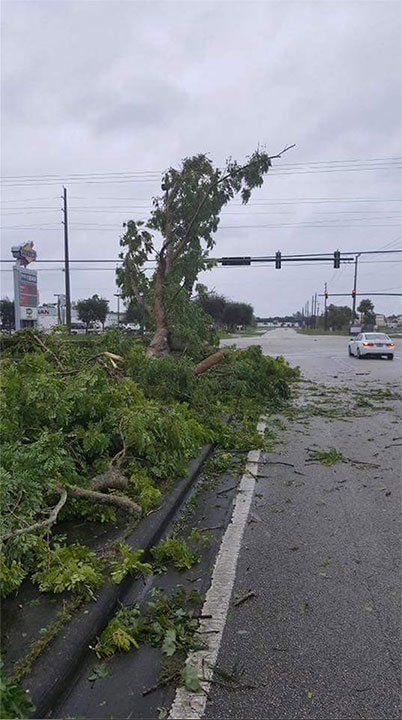 "<div class=""meta image-caption""><div class=""origin-logo origin-image none""><span>none</span></div><span class=""caption-text"">The Martin County Sheriff's Office in Florida said they are working to remove the downed trees. (Martin County Sheriff's Office/Facebook)</span></div>"