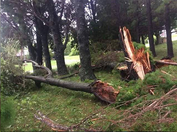 "<div class=""meta image-caption""><div class=""origin-logo origin-image none""><span>none</span></div><span class=""caption-text"">The Indian River County Emergency Services Department in Florida found this downed tree while conducting damage assessment on Friday. (Indian River County Emergency Services Department/Facebook)</span></div>"