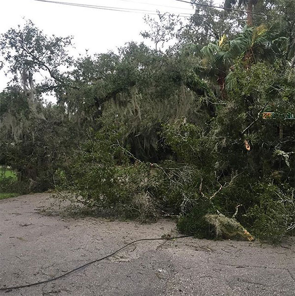 <div class='meta'><div class='origin-logo' data-origin='none'></div><span class='caption-text' data-credit='bobmicket/Instagram'>Bob Micket near Fort Pierce, Fla., shared this photo of downed trees and power lines.</span></div>