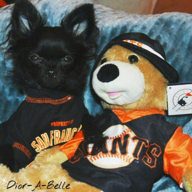 <div class='meta'><div class='origin-logo' data-origin='none'></div><span class='caption-text' data-credit='Photo submitted to KGO-TV by @diorabelle/Instagram'>ABC7 viewers are showing off their San Francisco Giants fan pride. Share yours by tagging them #abc7now!</span></div>