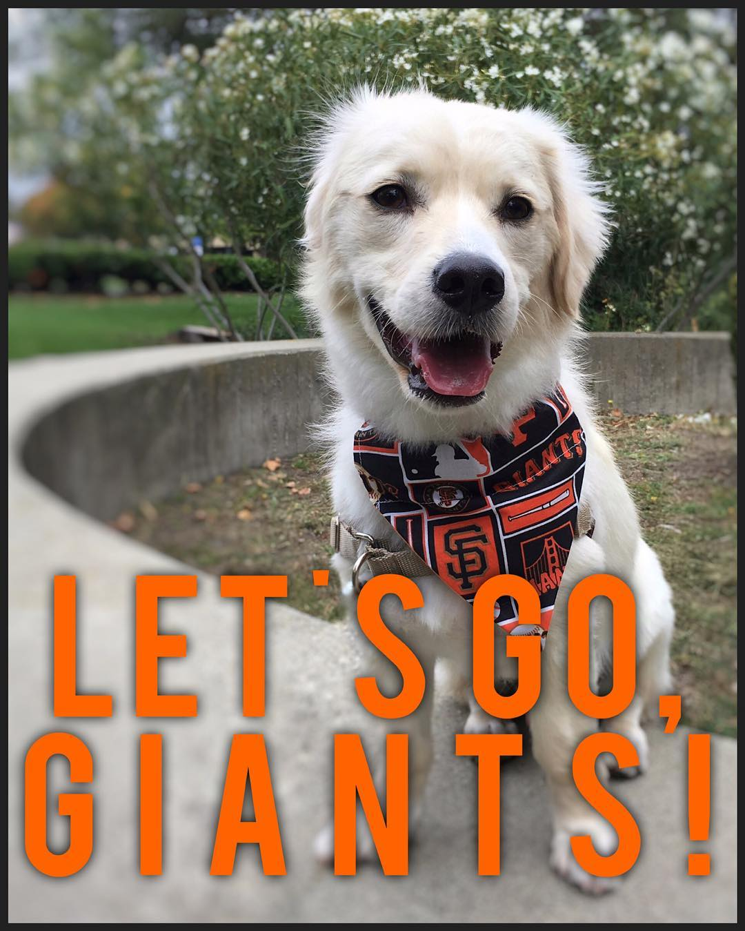 <div class='meta'><div class='origin-logo' data-origin='none'></div><span class='caption-text' data-credit='Photo submitted to KGO-TV by @noahsarf/Instagram'>ABC7 viewers are showing off their San Francisco Giants fan pride. Share yours by tagging them #abc7now!</span></div>