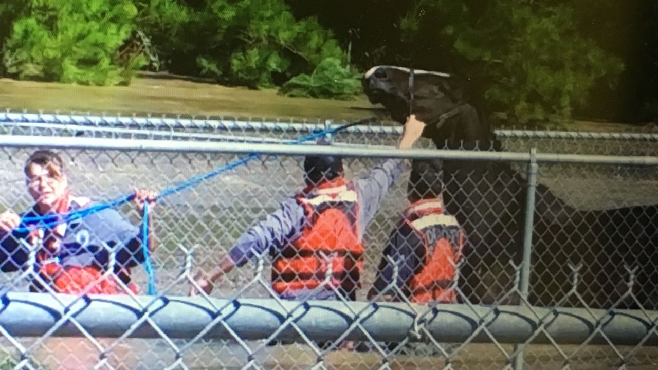 "The Cumberland County Swift Water Rescue Team saves ""Bob"" from high water"