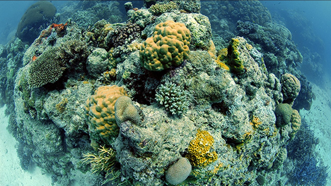 The Great Barrier Reef Is Not Actually Dead Abc7chicago Com