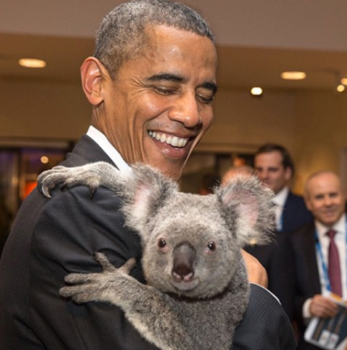 "<div class=""meta image-caption""><div class=""origin-logo origin-image none""><span>none</span></div><span class=""caption-text"">A koala looks directly at Souza's lens at the G20 Summit in Brisbane, Australia in 2014. (Pete Souza, Chief Official White House Photographer)</span></div>"