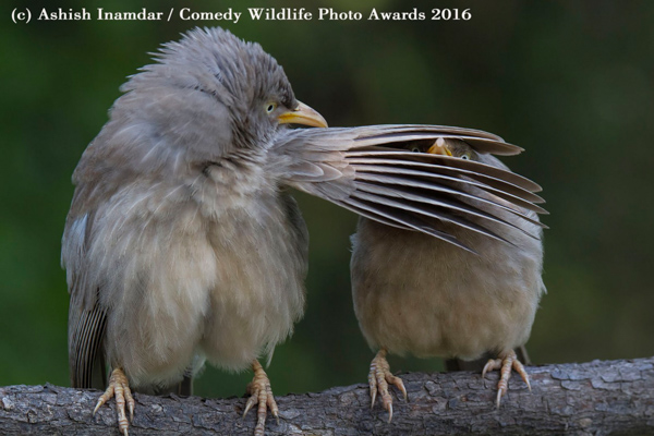 Photos 2016 Comedy Wildlife Photography Awards Winners Finalists Abc11 Raleigh Durham