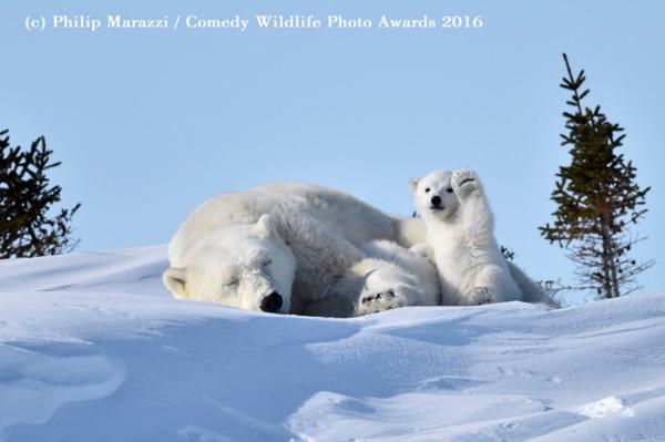 """<div class=""""meta image-caption""""><div class=""""origin-logo origin-image none""""><span>none</span></div><span class=""""caption-text"""">(Philip Marazzi/Comedy Wildlife Photo Awards 2016)</span></div>"""