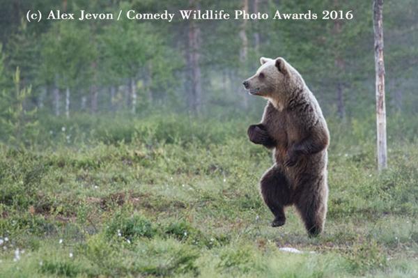 """<div class=""""meta image-caption""""><div class=""""origin-logo origin-image none""""><span>none</span></div><span class=""""caption-text"""">(Alex Jevon/Comedy Wildlife Photo Awards 2016)</span></div>"""