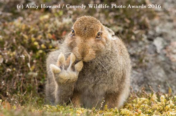 """<div class=""""meta image-caption""""><div class=""""origin-logo origin-image none""""><span>none</span></div><span class=""""caption-text"""">(Andy Howard/Comedy Wildlife Photo Awards 2016)</span></div>"""