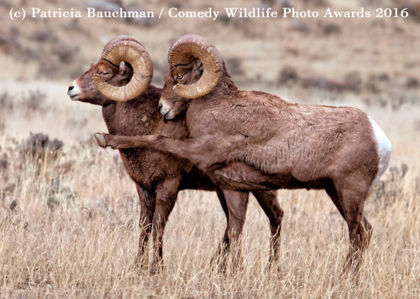 """<div class=""""meta image-caption""""><div class=""""origin-logo origin-image none""""><span>none</span></div><span class=""""caption-text"""">(Patricia Bauchman/Comedy Wildlife Photo Awards 2016)</span></div>"""