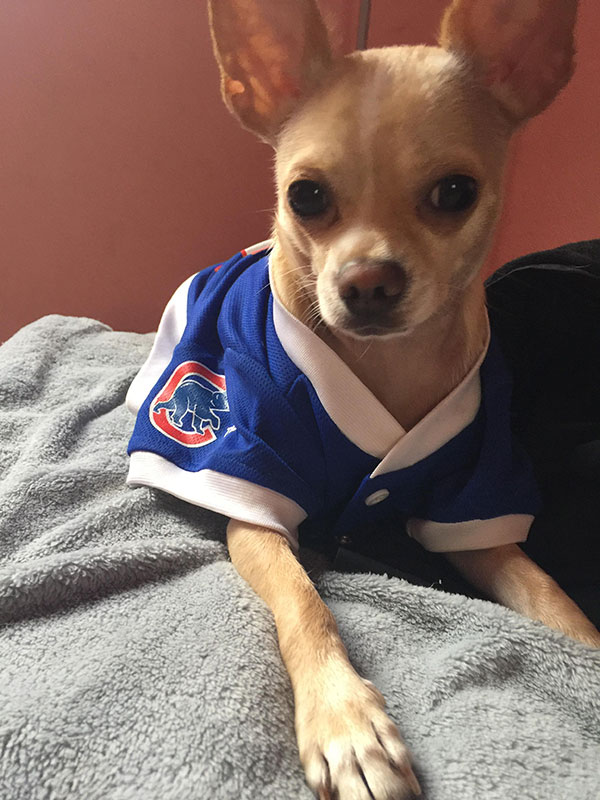 "<div class=""meta image-caption""><div class=""origin-logo origin-image none""><span>none</span></div><span class=""caption-text"">Not only humans can be Cubs fans.</span></div>"