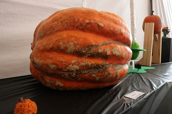 "<div class=""meta image-caption""><div class=""origin-logo origin-image ktrk""><span>KTRK</span></div><span class=""caption-text"">This is ""Yuuuge-kin"" by Kalie Brown as part of Adcetera's 19th annual pumpkin carving contest.</span></div>"