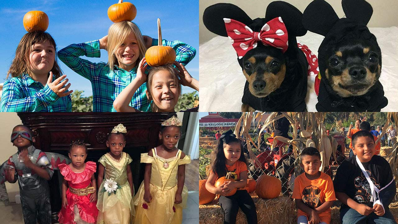 ABC7 viewers shared these fun and festive Halloween photos!