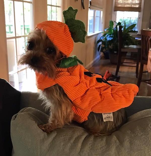 <div class='meta'><div class='origin-logo' data-origin='none'></div><span class='caption-text' data-credit=''>A tiny pumpkin - sent in by Casey Lynn Daugherty</span></div>