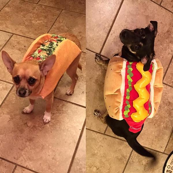 <div class='meta'><div class='origin-logo' data-origin='none'></div><span class='caption-text' data-credit=''>A taco and a hot dog- sent in by Lindsay Lund</span></div>