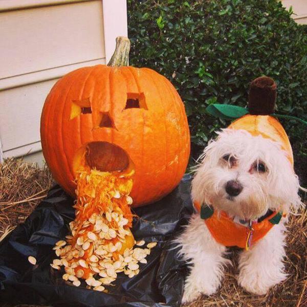 <div class='meta'><div class='origin-logo' data-origin='none'></div><span class='caption-text' data-credit=''>Two pumpkins - sent in from Lynda Peaden Joyner</span></div>