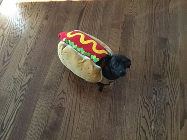 <div class='meta'><div class='origin-logo' data-origin='none'></div><span class='caption-text' data-credit=''>Nala the hot dog- sent in by Laurel Rose</span></div>