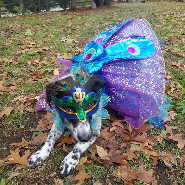 """<div class='meta'><div class='origin-logo' data-origin='none'></div><span class='caption-text' data-credit=''>Kaylee showing off her """"tailfeathers"""" from Sara Collins</span></div>"""