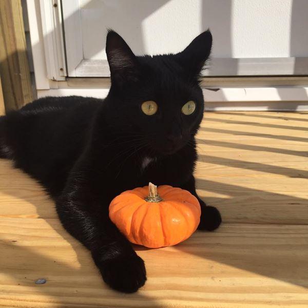 <div class='meta'><div class='origin-logo' data-origin='none'></div><span class='caption-text' data-credit=''>Jinx the Halloween cat - Rhonda Hinzman Parsons</span></div>
