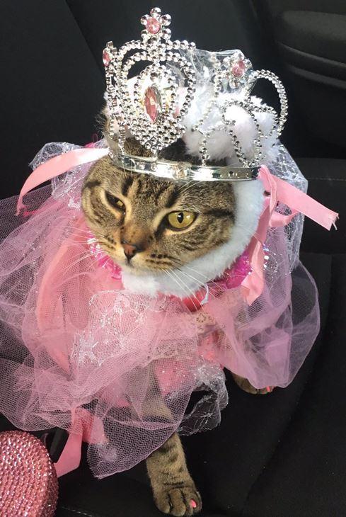 <div class='meta'><div class='origin-logo' data-origin='none'></div><span class='caption-text' data-credit=''>Kitty princess - Roseanna Marzili</span></div>