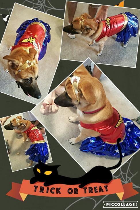 <div class='meta'><div class='origin-logo' data-origin='none'></div><span class='caption-text' data-credit=''>Miss Lady as Wonder Woman -- Misty and Nicholas Hill</span></div>