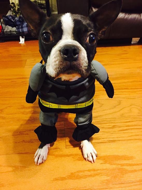 <div class='meta'><div class='origin-logo' data-origin='none'></div><span class='caption-text' data-credit=''>Shamu as Batman - Anh Vu Nezarati</span></div>