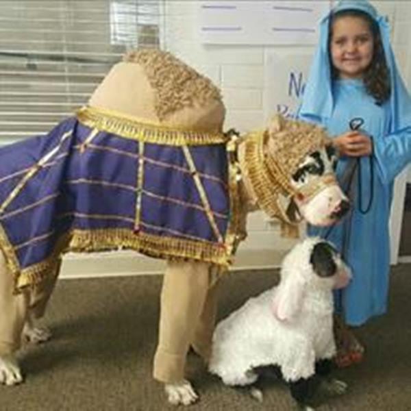 <div class='meta'><div class='origin-logo' data-origin='none'></div><span class='caption-text' data-credit=''>Royal camel (Marcus the Great Dane), Sheep (MonkeyMan, rescued hairless) and Shepherd, Ellie Rae. - Margaret</span></div>
