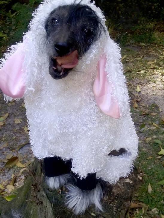 <div class='meta'><div class='origin-logo' data-origin='none'></div><span class='caption-text' data-credit=''>Wolf in Sheep's clothing - Margaret Corry</span></div>